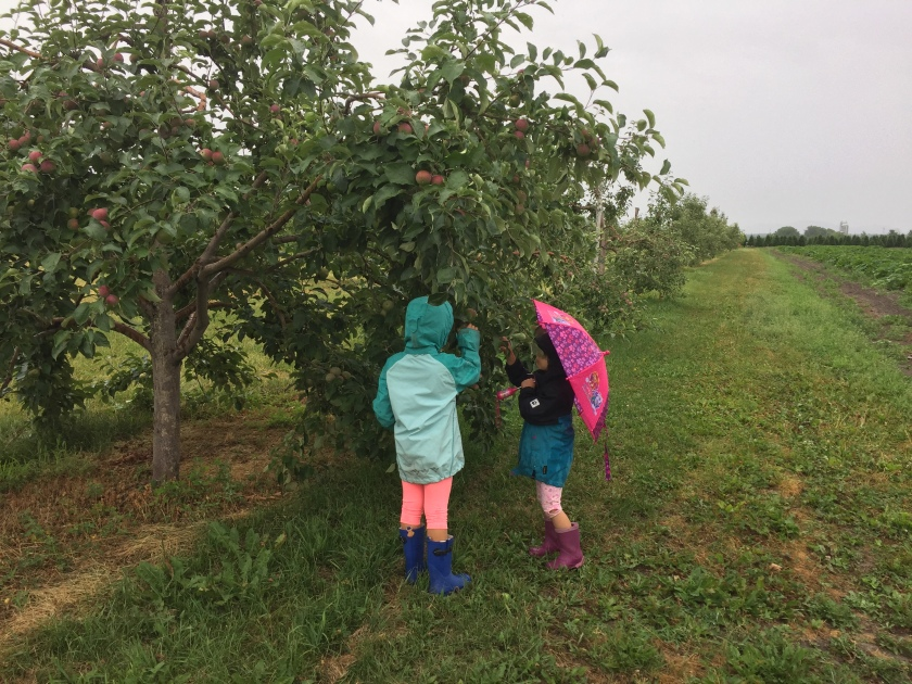 Verger Champetre orchard pick your own