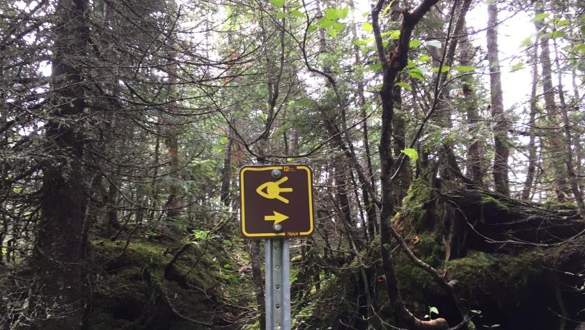 Sepaq Monts Valin National Park viewpoint