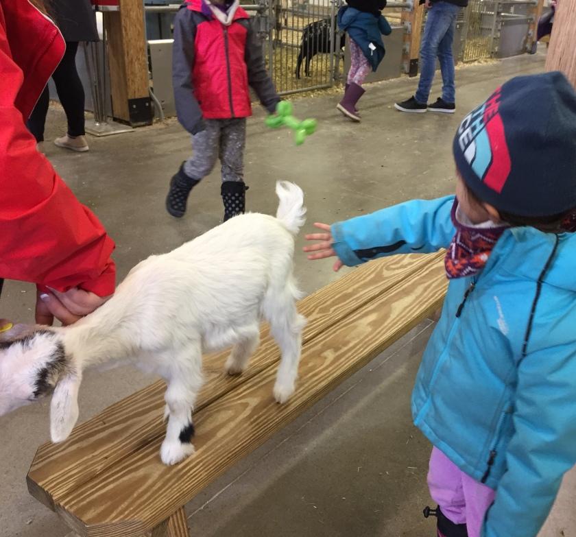 Ferme Guyon Educational animal farm