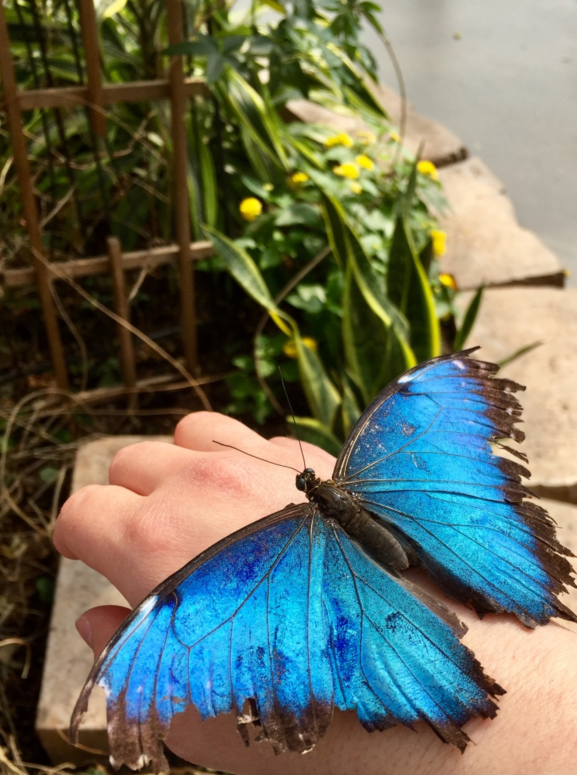 Ferme Guyon butterfly house