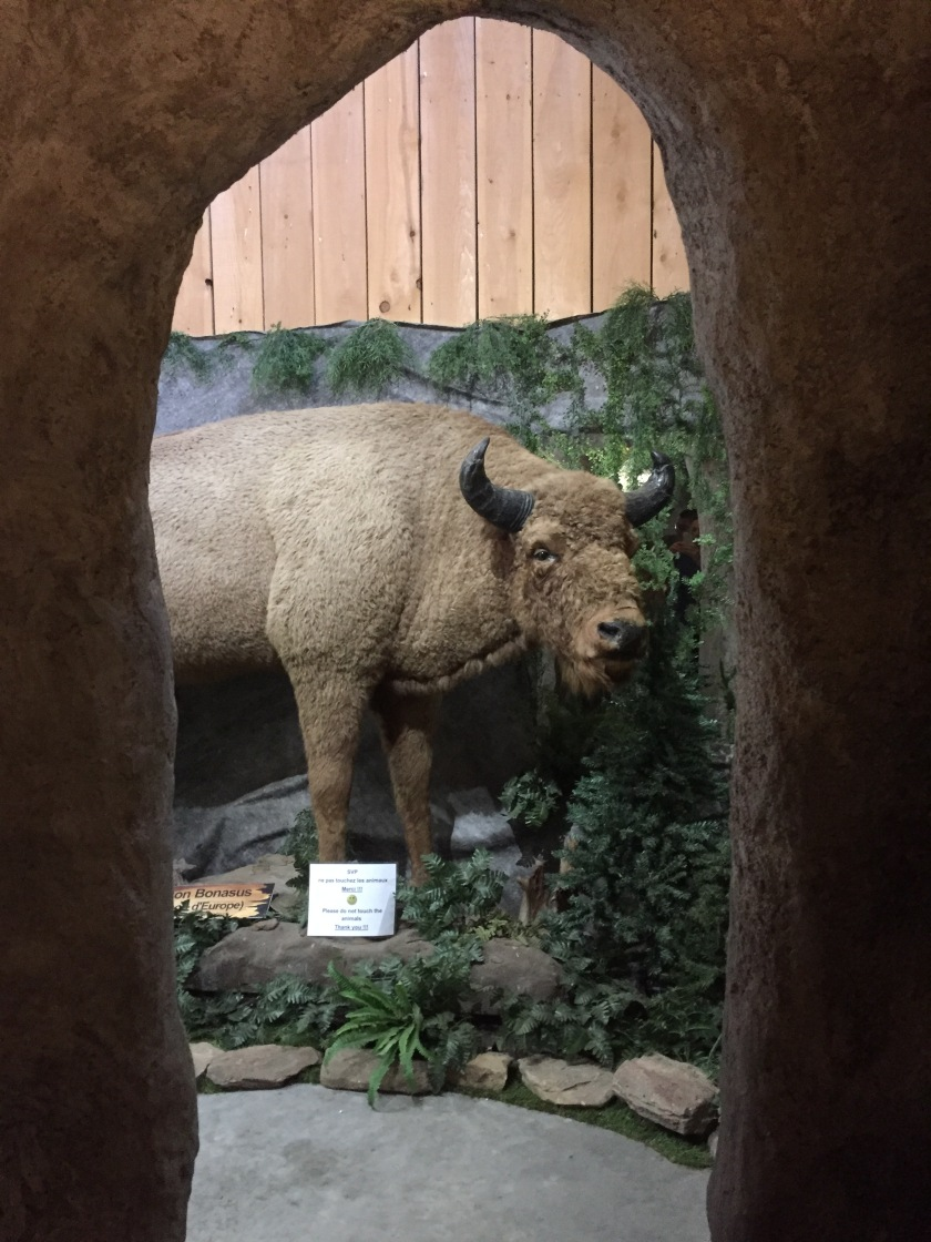 Terre des bisons discovery center