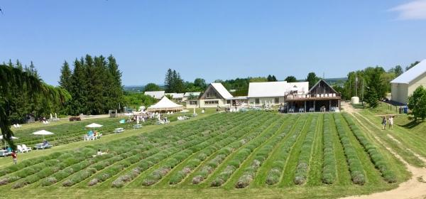 Maison Lavande - Lavender fields